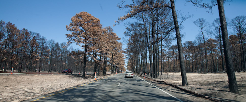 Charred Pines of Bastrop