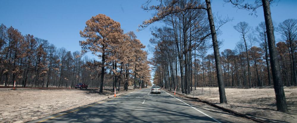 Charred Pines of Bastrop
